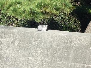 海水浴場の猫1.jpg