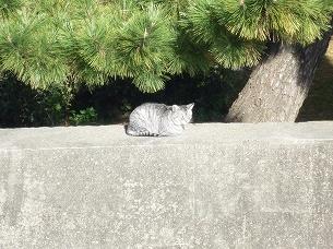 海水浴場の猫2.jpg